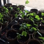 East York Elementary is in the Greenhouse Business